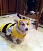 Bees Update 2013